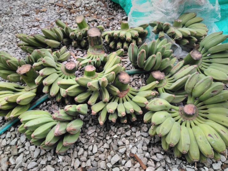 191バナナ