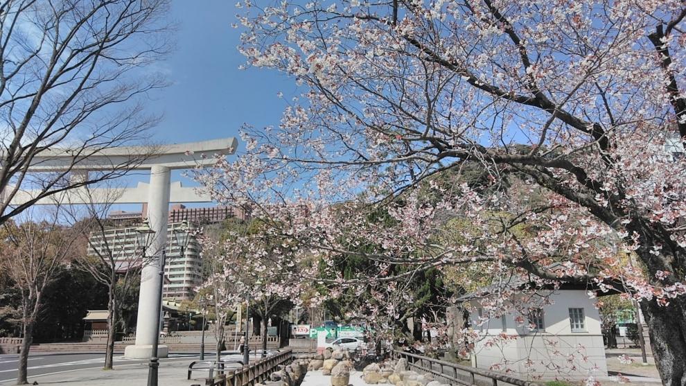 193桜2
