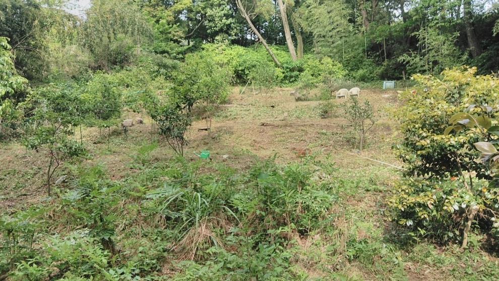 R152伐採