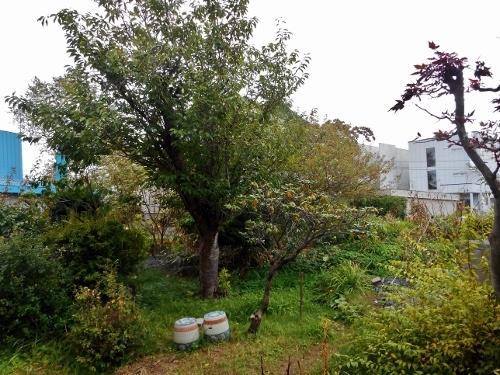西岡4条 Nさん宅の庭 月寒川の旧河道