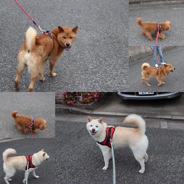 ロングお散歩1