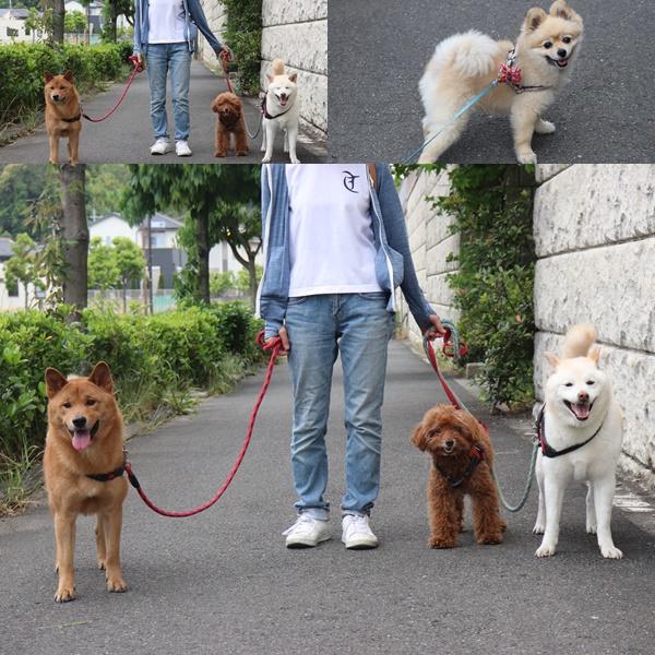 ロングお散歩5