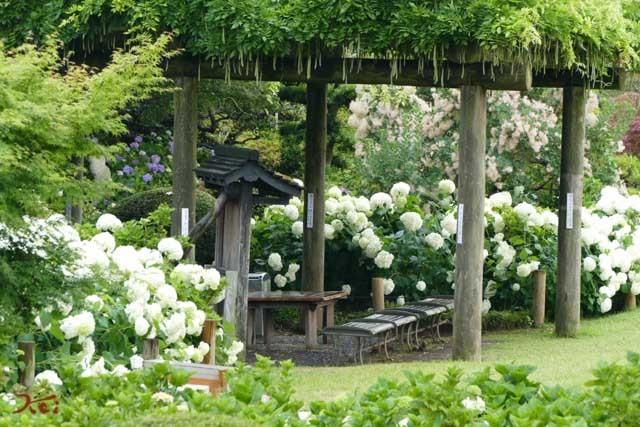 20190624紫陽花_保和苑17