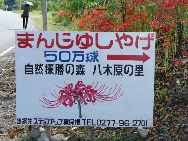 20190929彼岸花_水沢02