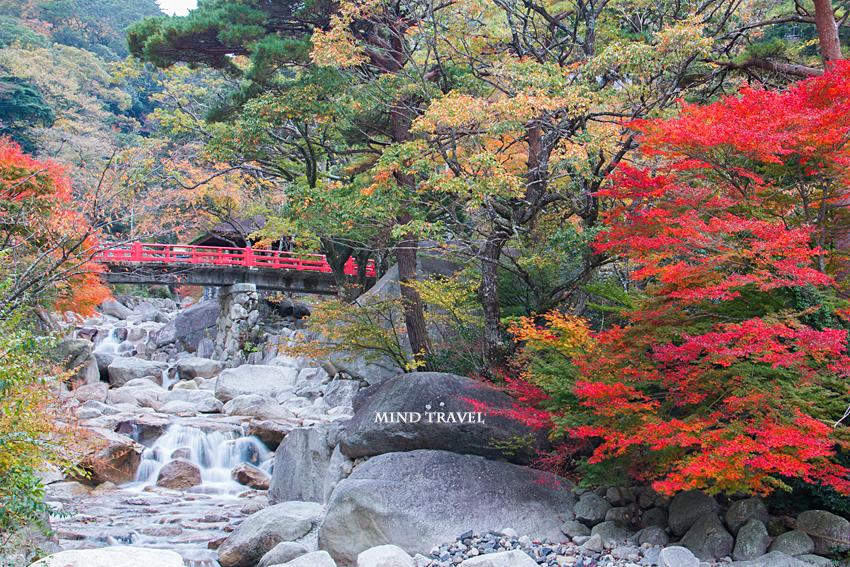 湯の山温泉 紅葉