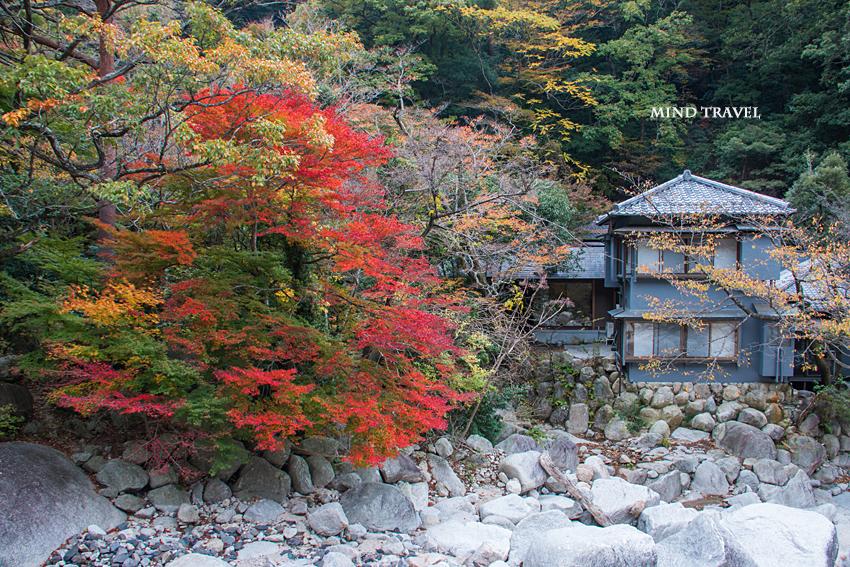 湯の山温泉 紅葉3