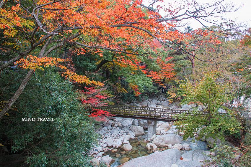 湯の山温泉 桜紅葉