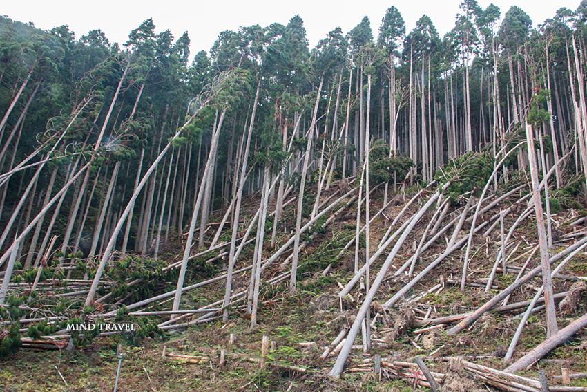 貴船駅付近 台風で倒れた木々