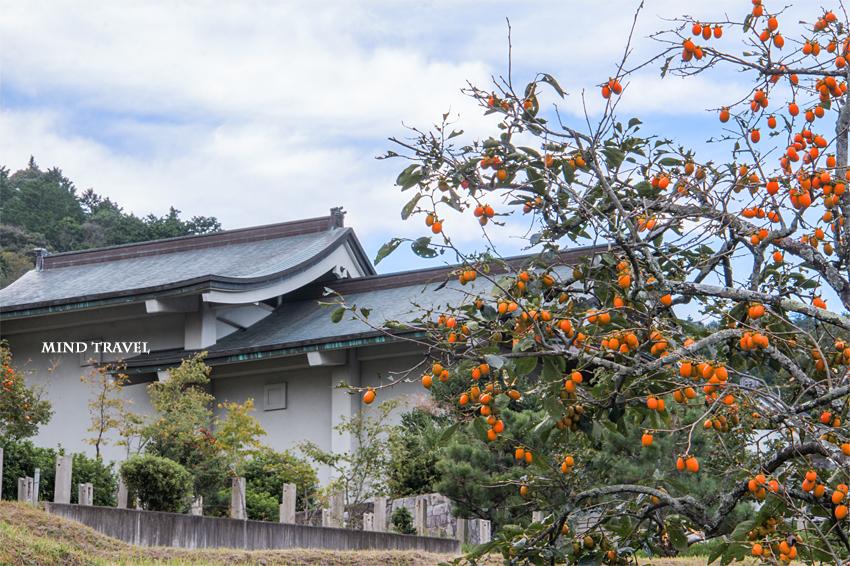 禅定寺 柿