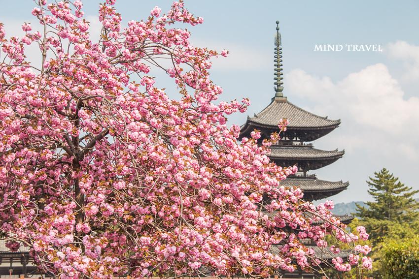 興福寺 五重塔2
