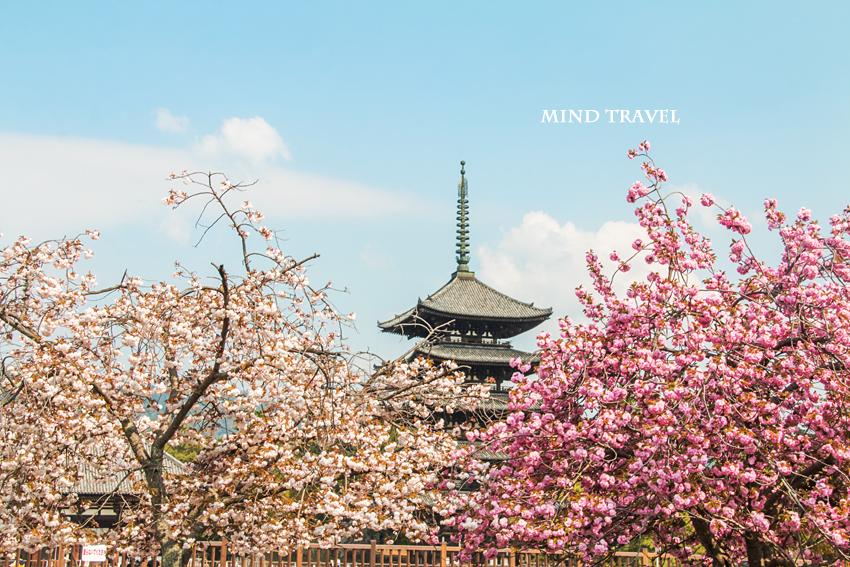 興福寺 五重塔3