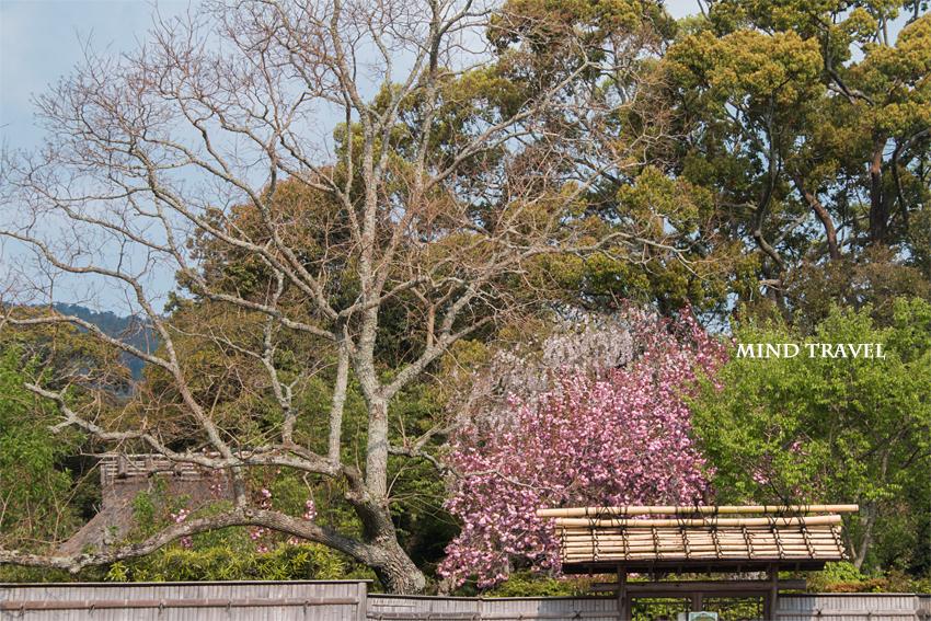 奈良国立博物館 庭園