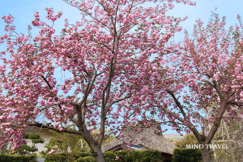 奈良国立博物館 庭園2