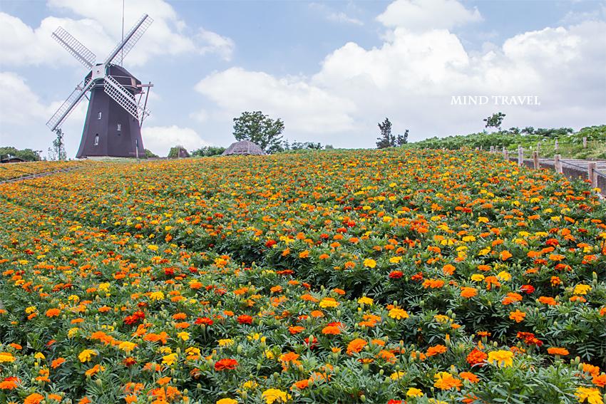 鶴見緑地公園 風車の丘 マリーゴールド2