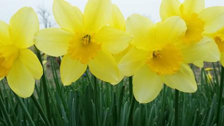 どの花みてもきれいだな