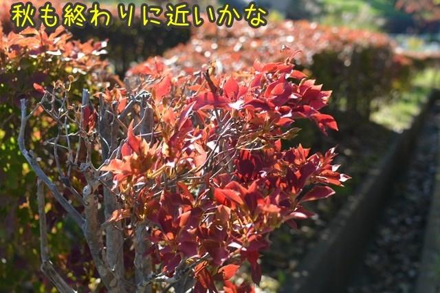 a-DSC_0366.jpg