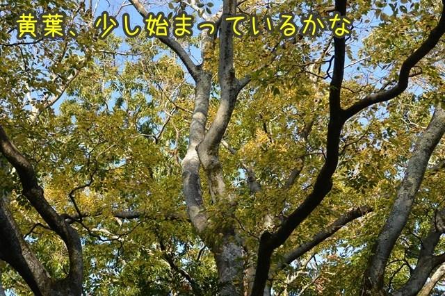 a-DSC_0419.jpg
