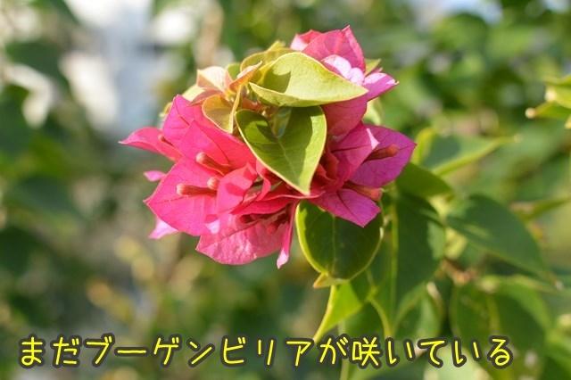 a-DSC_0463.jpg