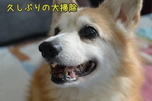 a-DSC_0497.jpg