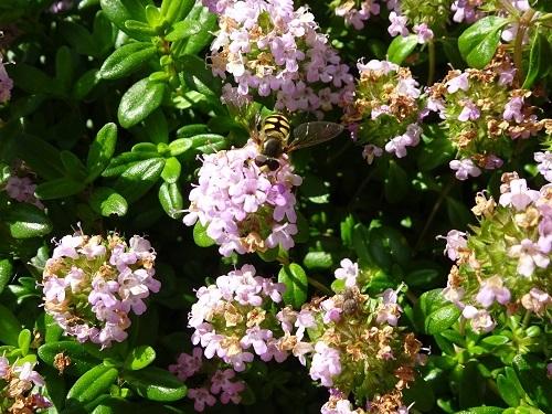 6蜜蜂20190504