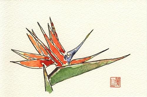 71極楽鳥花絵手紙