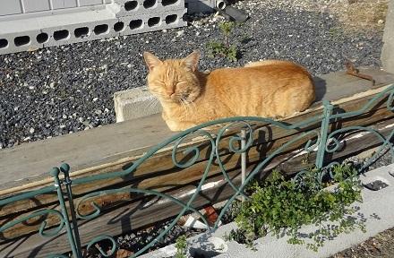 2 近所の野良猫