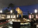 恐竜博物館4