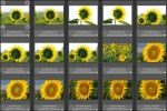 花の海004