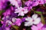 花の海011