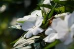 花の海012