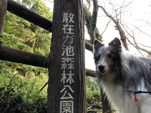 森林公園0