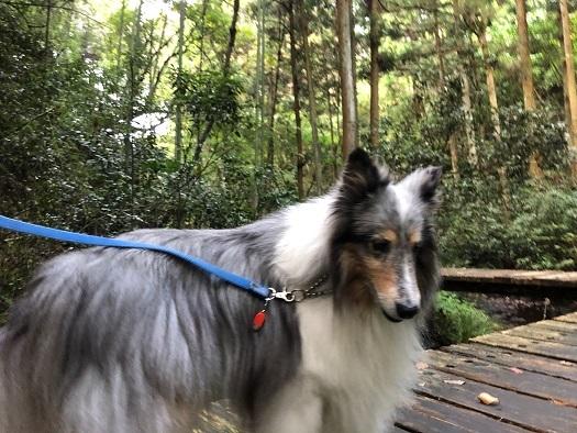 森林公園4