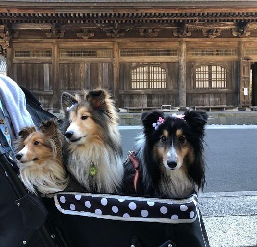 鎌倉巡り1