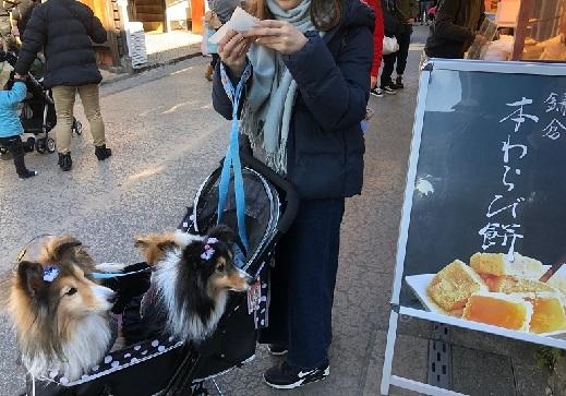 鎌倉巡り食べ歩き