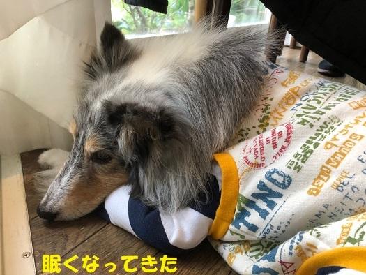 鎌倉ランチ93