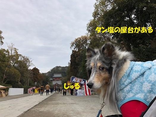 鶴岡八幡18