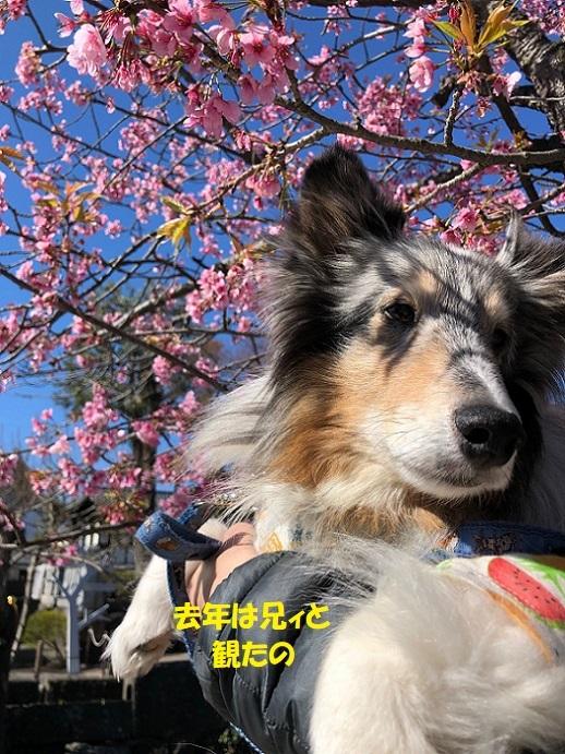 鎌倉散歩5