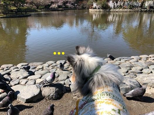 鎌倉散歩93