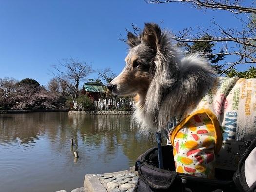 鎌倉散歩94
