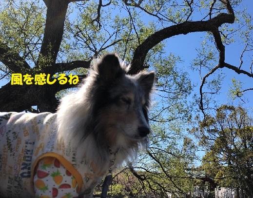 鎌倉散歩95