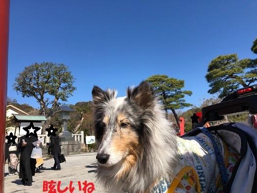 鎌倉散歩98