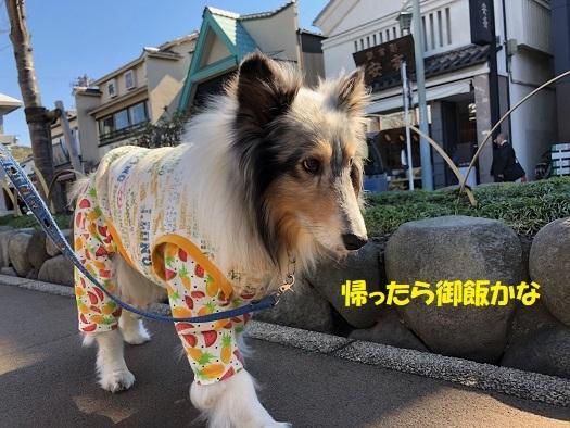 鎌倉散歩99