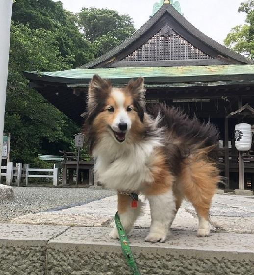 鎌倉宮99