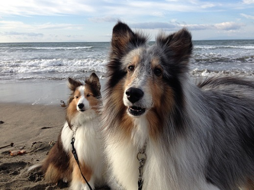 愛犬の日1