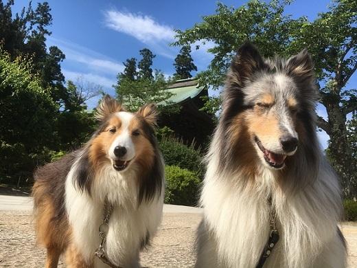 愛犬の日2