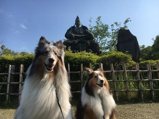 愛犬の日3