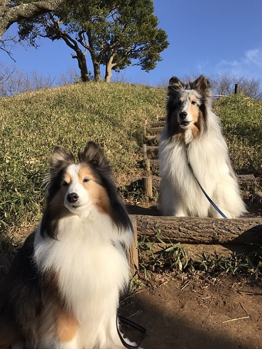 愛犬の日4
