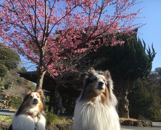 愛犬の日6