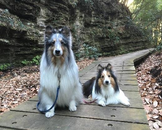 愛犬の日90