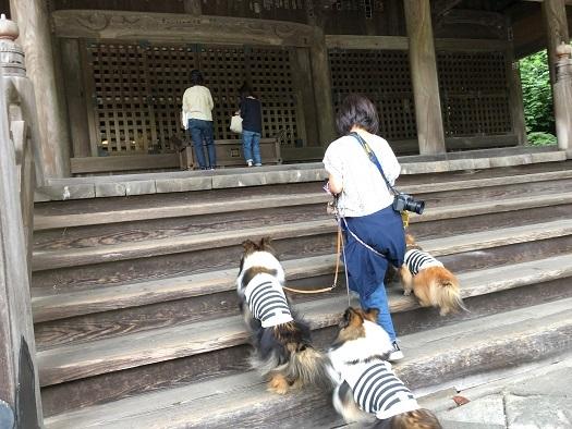妙本寺散歩2